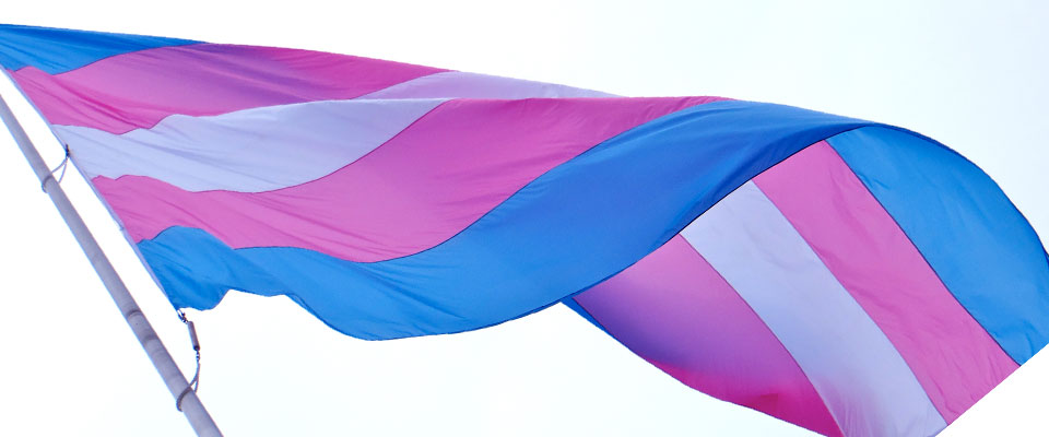 Photo of Trans flag